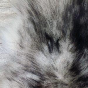 Schapenvacht IJslands Mouflon (3)